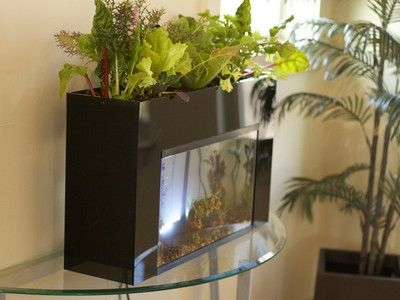 Student-designed kit turns 10 gallon aquariums into aquaponic gardens #kickstarter #aquaponics: Water Gardens, Indoor Gardens, Fish Tanks, Gardens Water, Aquasprout Aquaponics, Fish Aquariums, Aquaponics Gardens, 10 Gallon, Gallon Aquariums