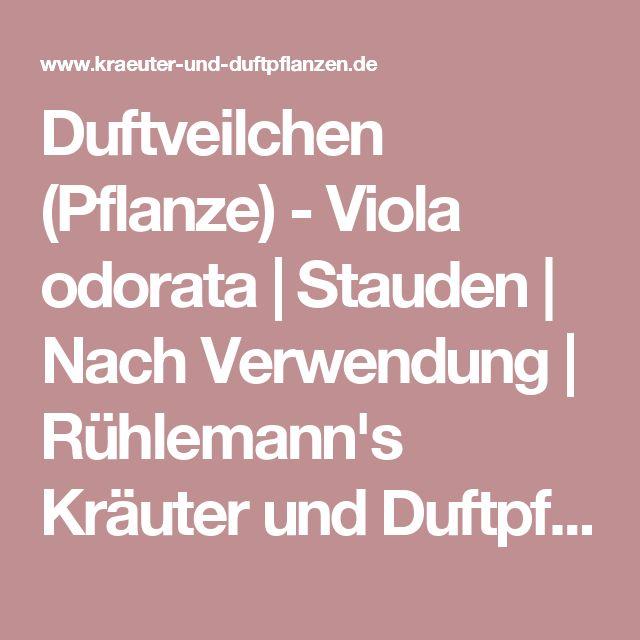 Duftveilchen (Pflanze) - Viola odorata   Stauden   Nach Verwendung   Rühlemann's Kräuter und Duftpflanzen