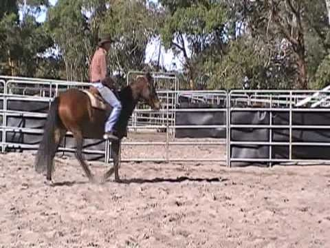 Just another day of riding a horse. This video will show you how to prepare your horse before you practice your horse for campdrafting or other types of competition.