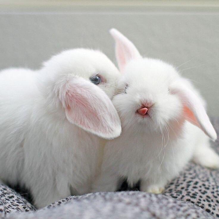 зайчики целуются фото более важно