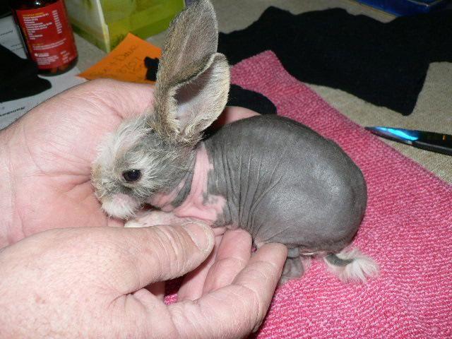 109 Best Animals Images On Pinterest: Best 25+ Hairless Animals Ideas On Pinterest