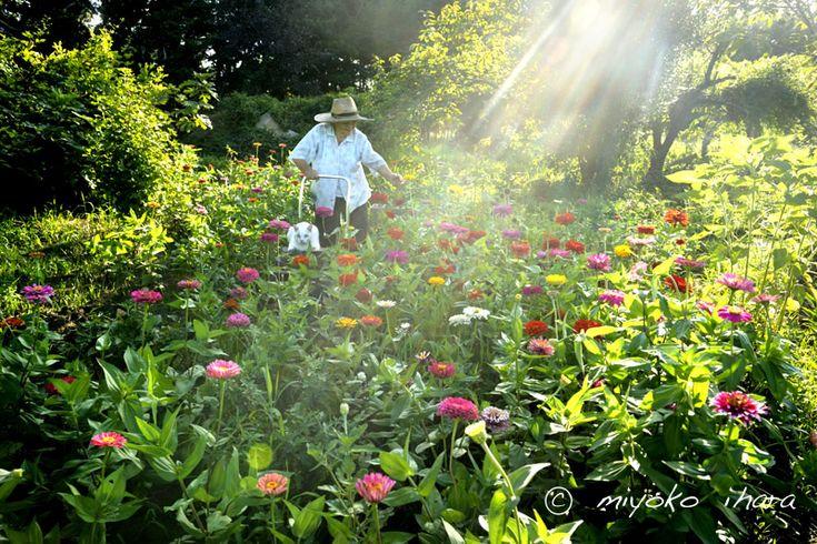 風土と共に生きる日本人の姿を、長期取材で追いかける写真家 伊原美代子サイトです。主なドキュメンタリー作品に「海女」「みさおとふくまる」等があります。 伊原美代子の視点をお楽しみ下さい。