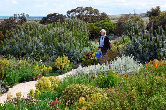 Sarah and Roger Budarick's dgought tolerant garden
