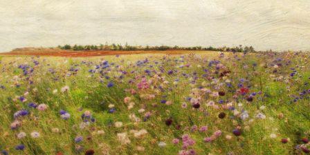 Field II mini