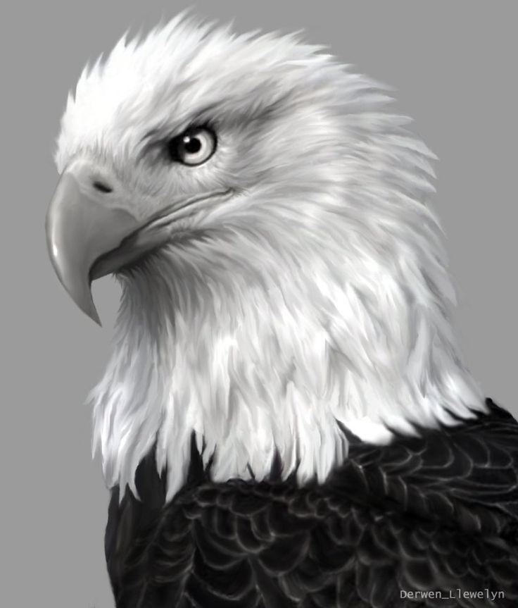 Картинки, картинки орлов рисунки