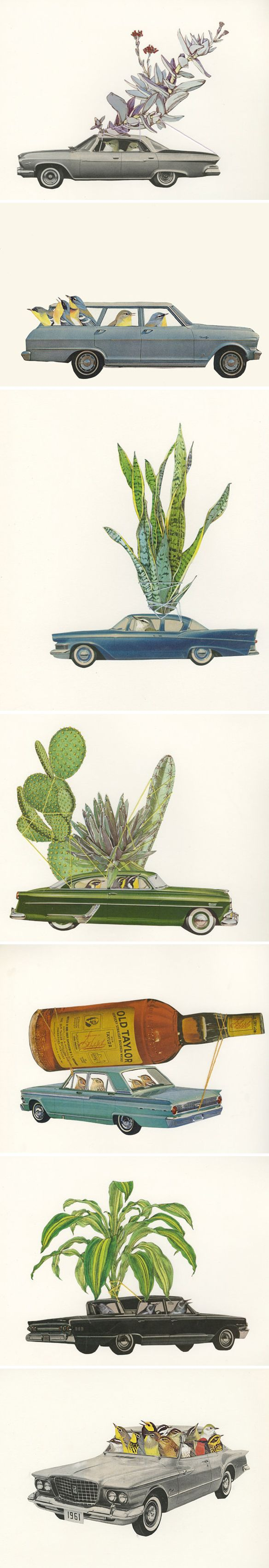 In love with artist Vivienne Strauss' road-tripping, plant-toting birds!