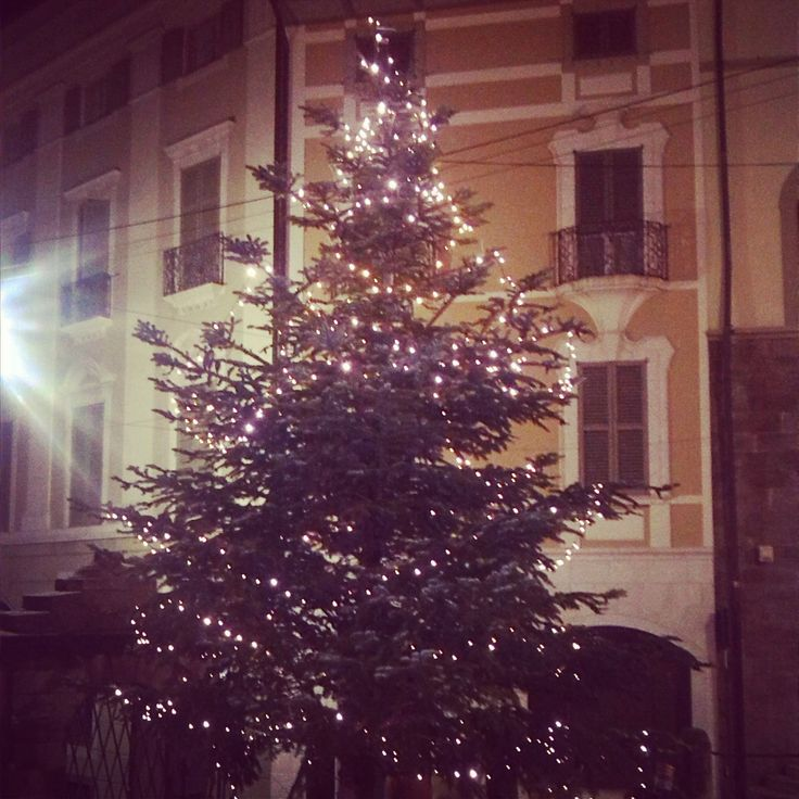 Christmas Tree Under Up Town Bed and Breakfast...!