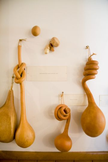 My father used to put gourds into containers as they grew to reshape them. Love the curled necks. rinne allen