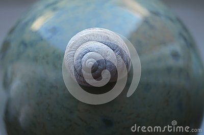 Shell on a abstract background
