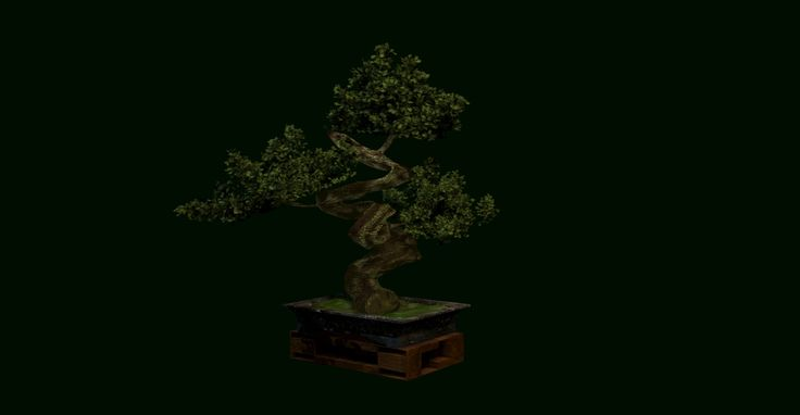 Bonsai Zelkova Kaliage, Edmundo Galindo on ArtStation at https://www.artstation.com/artwork/zB4YZ