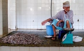 I stand in the fish market in Muttrah Bay, in the old part of Muscat, Oman, for a long time. It is boiling hot inside this concrete-floored, cream- tiled, hosed-down building on the fragrant coast of the Middle East.