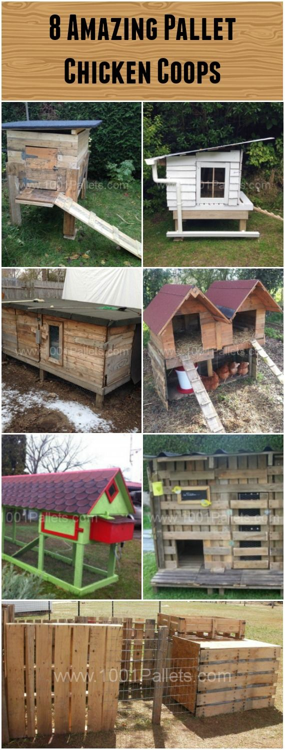 8 pallet chicken coops pallar for Plans for a chicken coop for 12 chickens