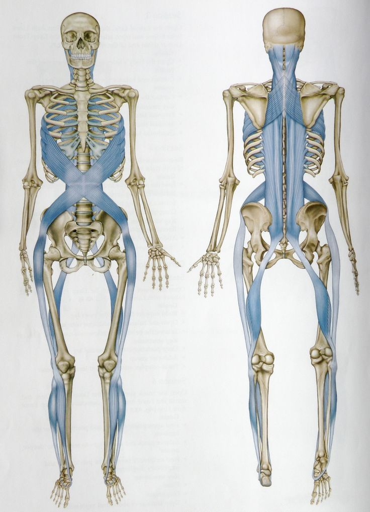 fascial lines - Google Search