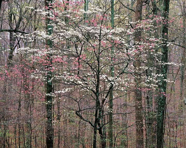 17 Best In The Southern Garden Images On Pinterest Flowers Garden Beautiful Flowers And