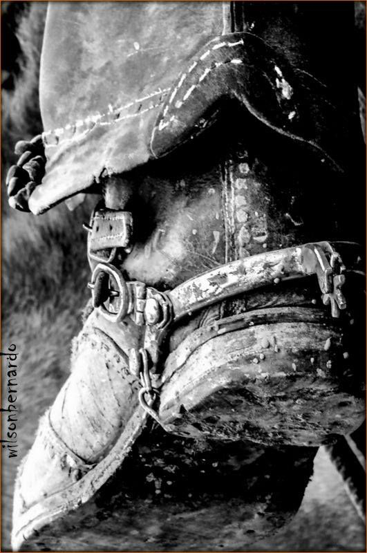 Vaqueiro Nordestino. Foto-@wilsonbernardo