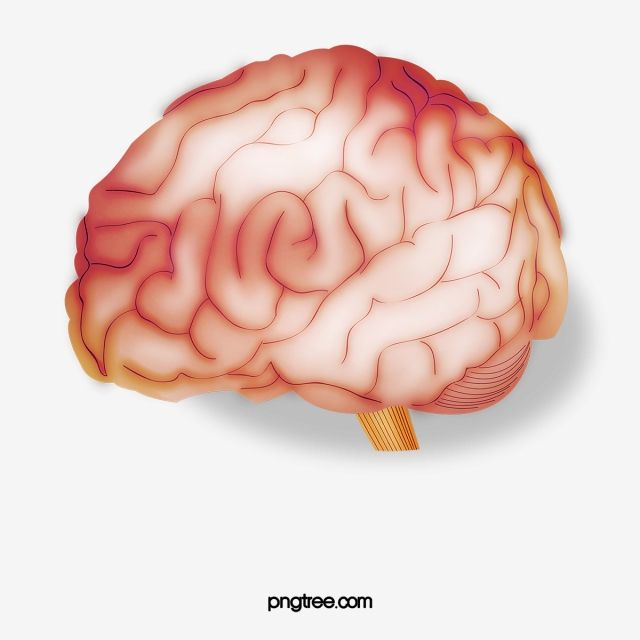 brain brain clipart fig brain png transparent clipart image and psd file for free download clip art creative background brain clipart brain brain clipart fig brain png