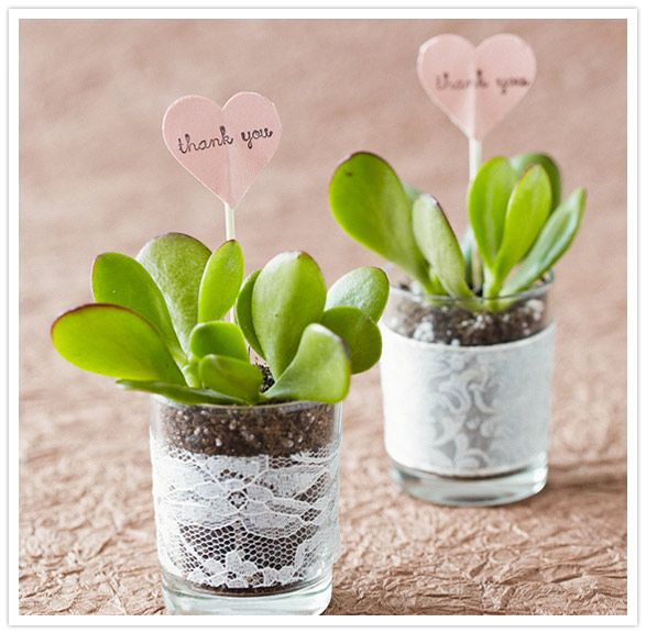succulents in a votive cup for an adorable little gift.