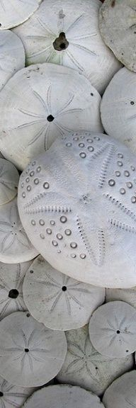 .Pismo Beach has some nice sand dollars. Camping this summer will be fun (July 2013)