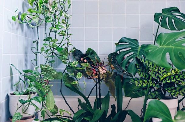 Shower plants will literally make your bathroom feel like a lush tropical garden