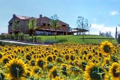 Would you like to live here?  #Marche #Sunflowers #garden