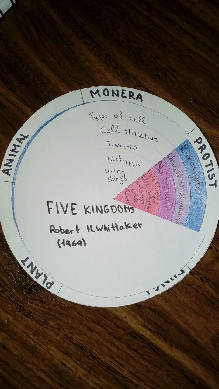 Interactive notebook  Five kingdom spinner | Teaching 6/8th