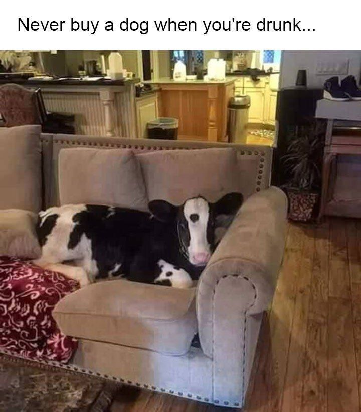 38 Hilariously Funny Photos With Captions You Can T Help But Laugh At Animalcap Animal Funny Photo Captions Funny Boyfriend Memes Funny Memes About Work