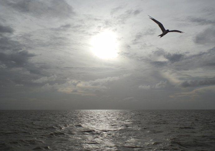 oiseau marajo amazonie brésil - blog voyage trace ta route http://www.trace-ta-route.com/ma-premiere-fois-ile-marajo-bresil/ #tracetaroute #bresil #marajo