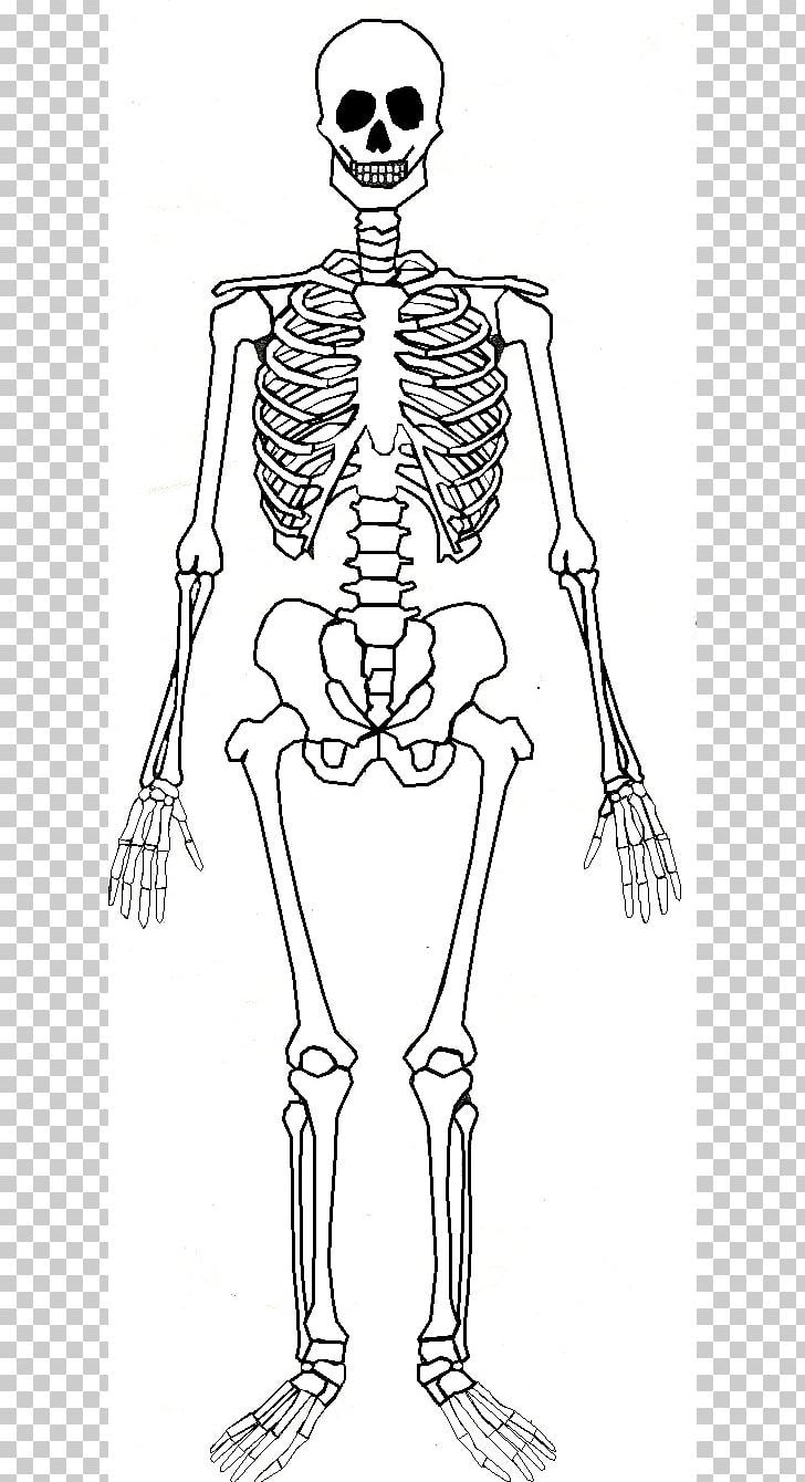 Human Skeleton Human Body Bone Anatomy Png Arm Art Black And White Clothing Costume Design Human Skeleton Anatomy Human Body Bones Body Bones