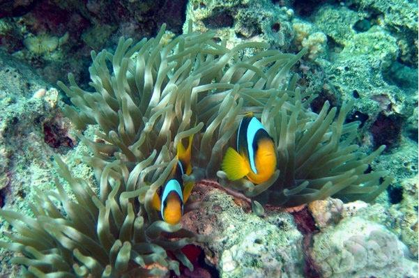 sharm el sheikh diving tours
