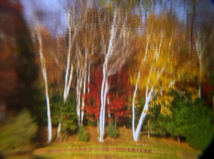 Just an inverted reflection.. Fall leaves and color.! Photo by Kyal Stephen Smith. Dorset Ontario Canada.!Taken with IPhone 4.