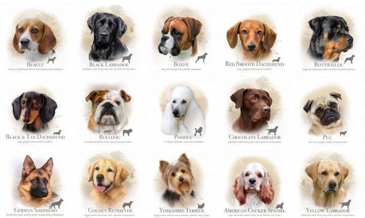 Free Rottweiler Puppies In Sri Lanka 2021
