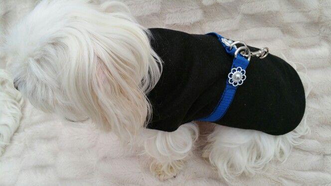 Black and blue cashmere coat