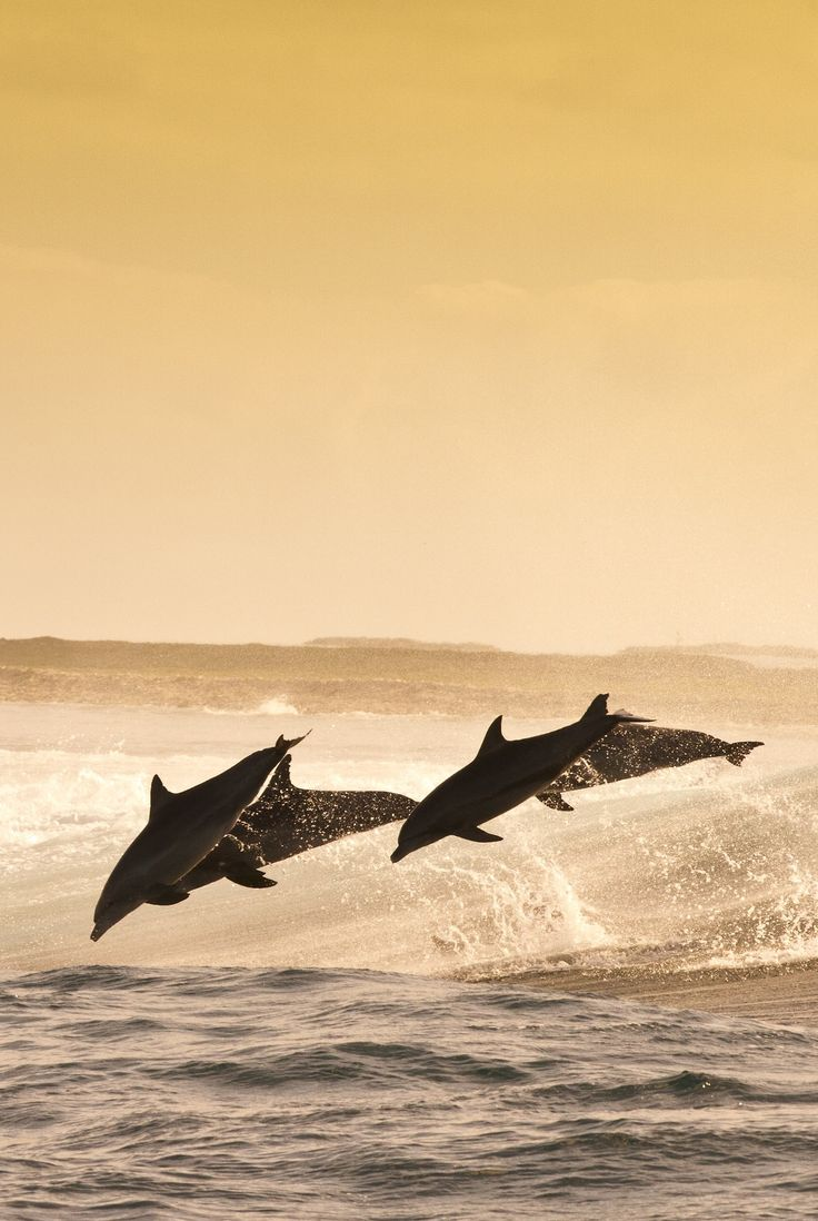 0rient-express:  dolphins | by mike riley.