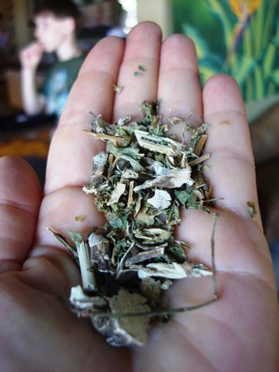Guinea Hen Weed Leaves aka Anamu- ,the powerful herb that works.