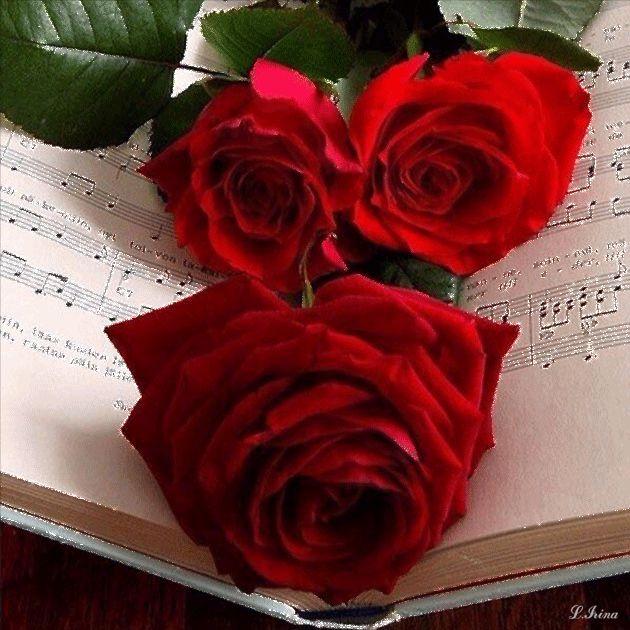 encuentra este pin y muchos ms en flores y rosas hermosas de