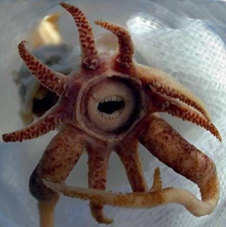 """5 weird animals and their """"teeth"""" www.altmandental.com"""