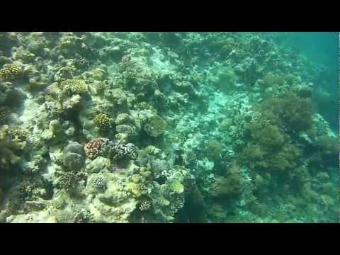 Palau Video 3