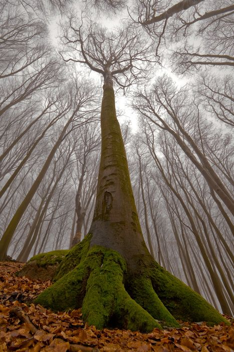 glorious: Awesome Trees, Human Faces, Photography Forests, Photography Angles, Trees Photography, Eerie Photography, Amazing Cameras Angles, Low Angles Photography, Forests Pictures
