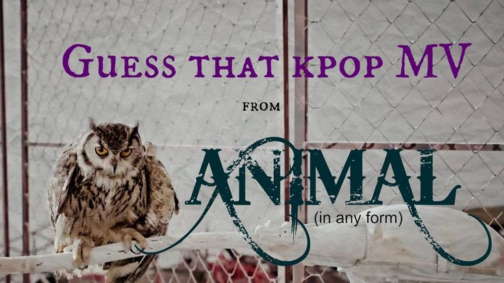 Guess That Kpop MV from ANIMAL [in any form] #2