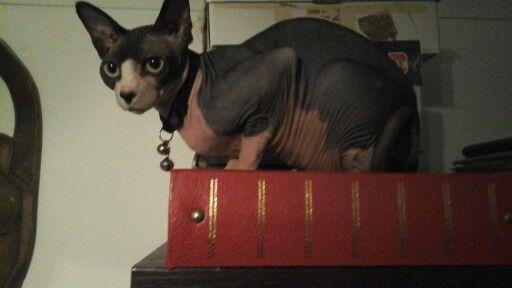 Kit kat,my little menace