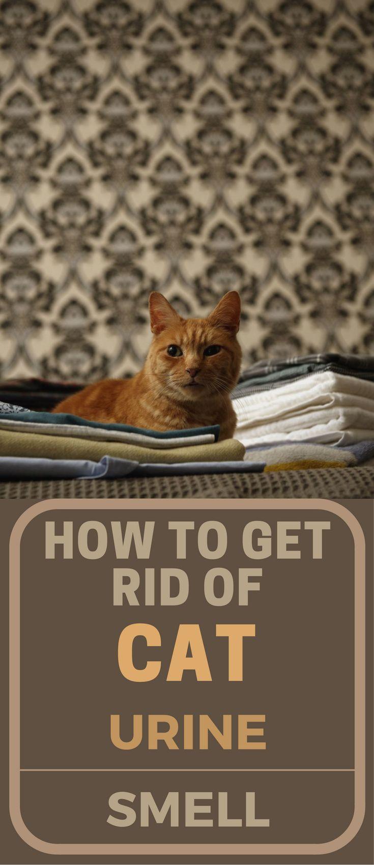 getting rid of cat urine in carpet  Floor Matttroy