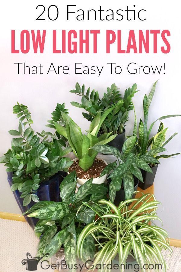 594 best plants images on pinterest plants decks and for No maintenance house plants