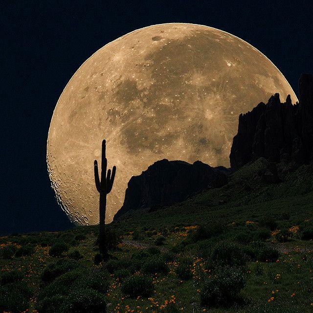 #desert #moon #cactus