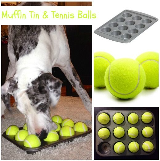 """Muffin Tin & Tennis Balls ~ Does your Dane perform crazy indoor """"zoomies"""" when you're unable to get out for your daily walk? Check out 3 DIY dog puzzle feeders sure to help expend some of that pent up energy…and save a lamp or two! http://thedanedame.com/diy-puzzle-feeder/"""