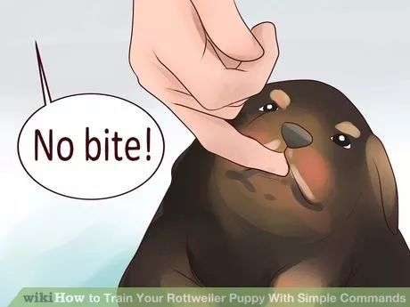 Image titled Train Your Rottweiler Puppy With Simple Commands Step 6