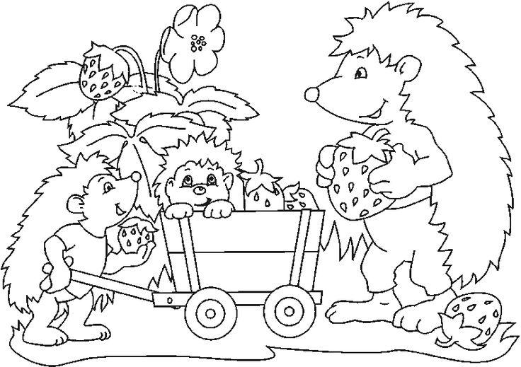 hedgehog coloring pages  ausmalbilder zum drucken igel