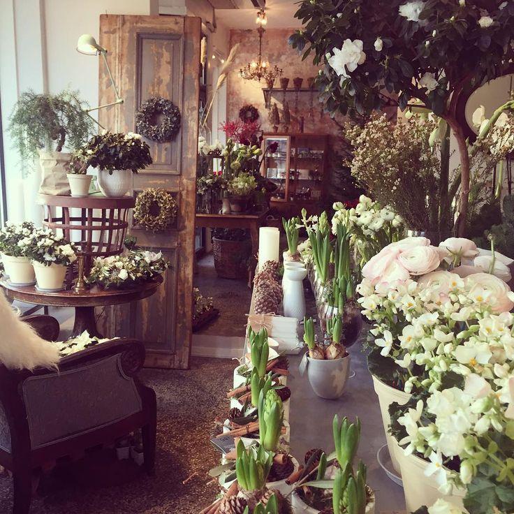 Det bugner av flotte varer!  Velkommen til Bislett  #jul #azalea #juleblomster #amaryllis #ranunkler #juleglede #krans #frodig #inspo #velkommen