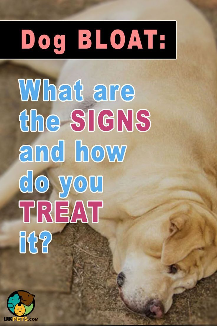 Dog Bloat What Are The Signs And Cure Dog Remedies Dogs Dog
