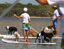 Dr Harry: Surfing dogs part 2 Ep 14 (03.05.2013) - Video