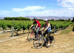 Wine Tours by Bike in Marlborough, New Zealand (bike a few miles round trip and visit five or six different vineyards to taste the different wines, along with some yummy cheeses and breads)